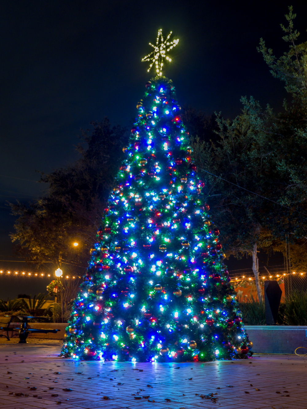 Katy Christmas Lights-2.jpg