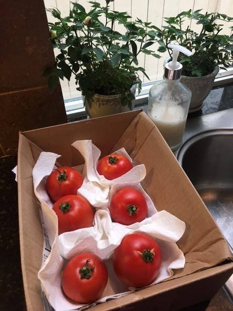 Beautiful tomatoes grown in Gene's garden and gifted to my family.