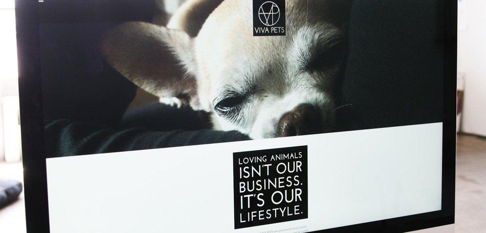 viva-pets-web-site-2.jpg