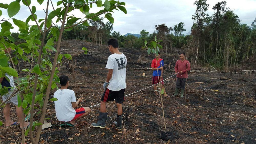 Guyabano planting 3.jpg