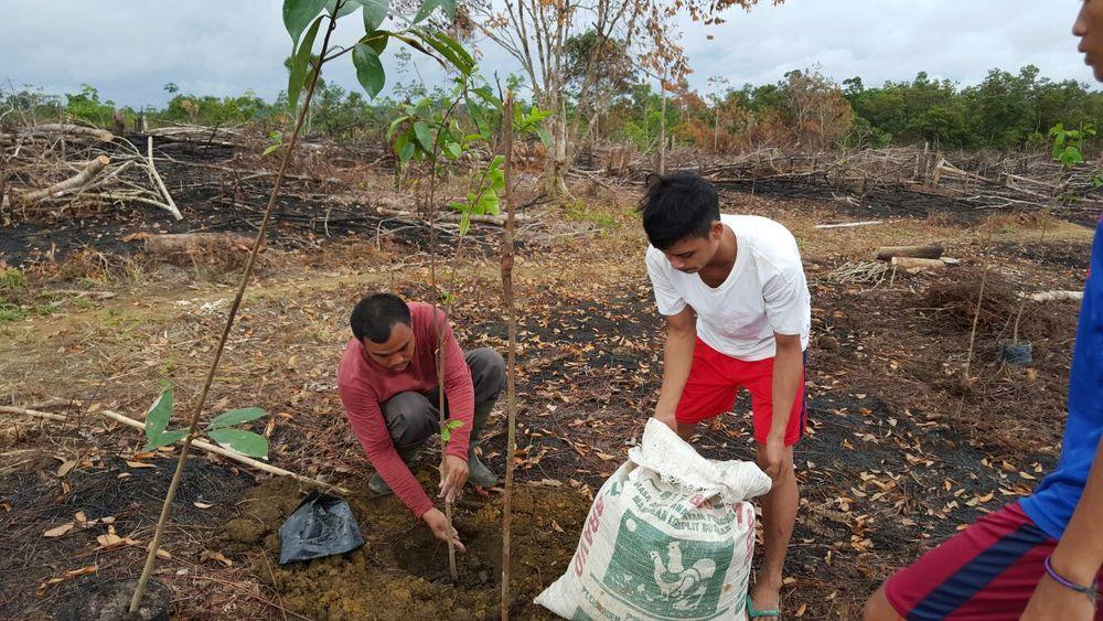 Guyabano planting 4.jpg