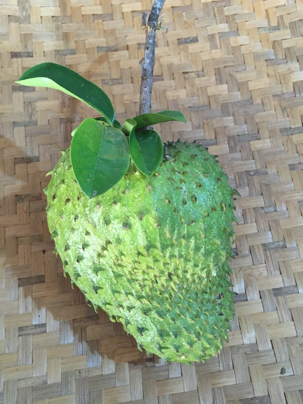 Guyabano fruit.jpg