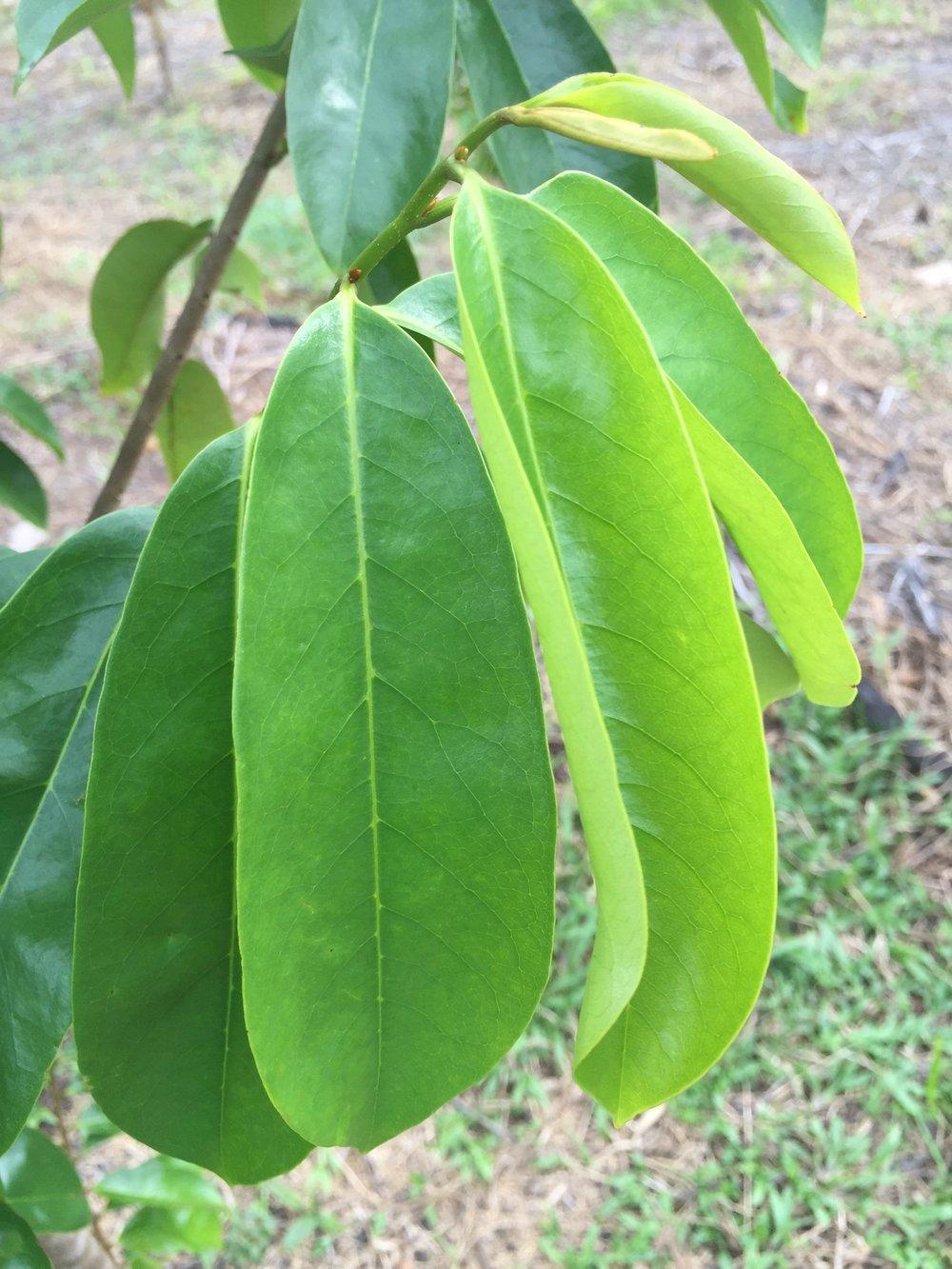 leaf picture.jpg