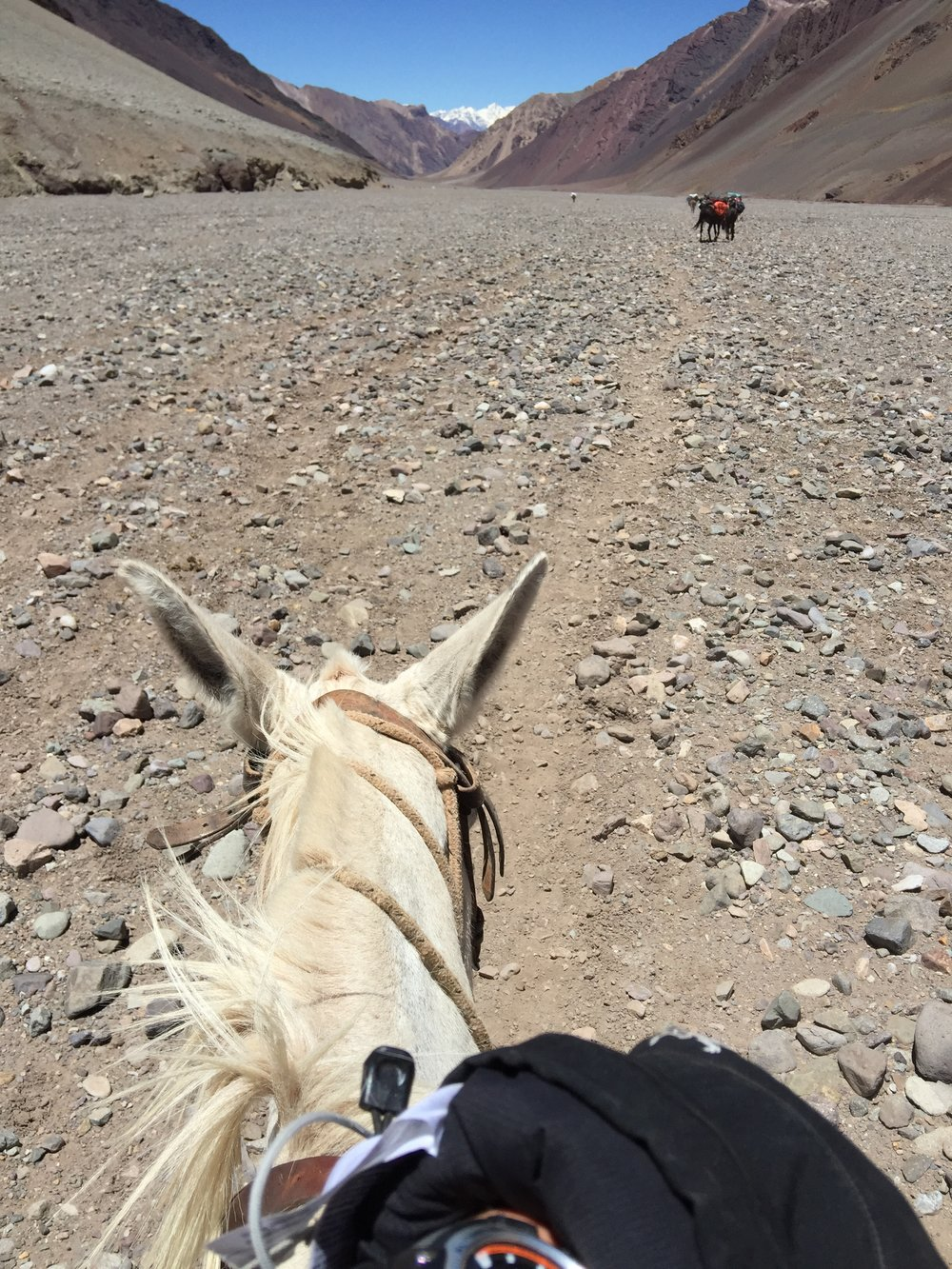 Mule perspective