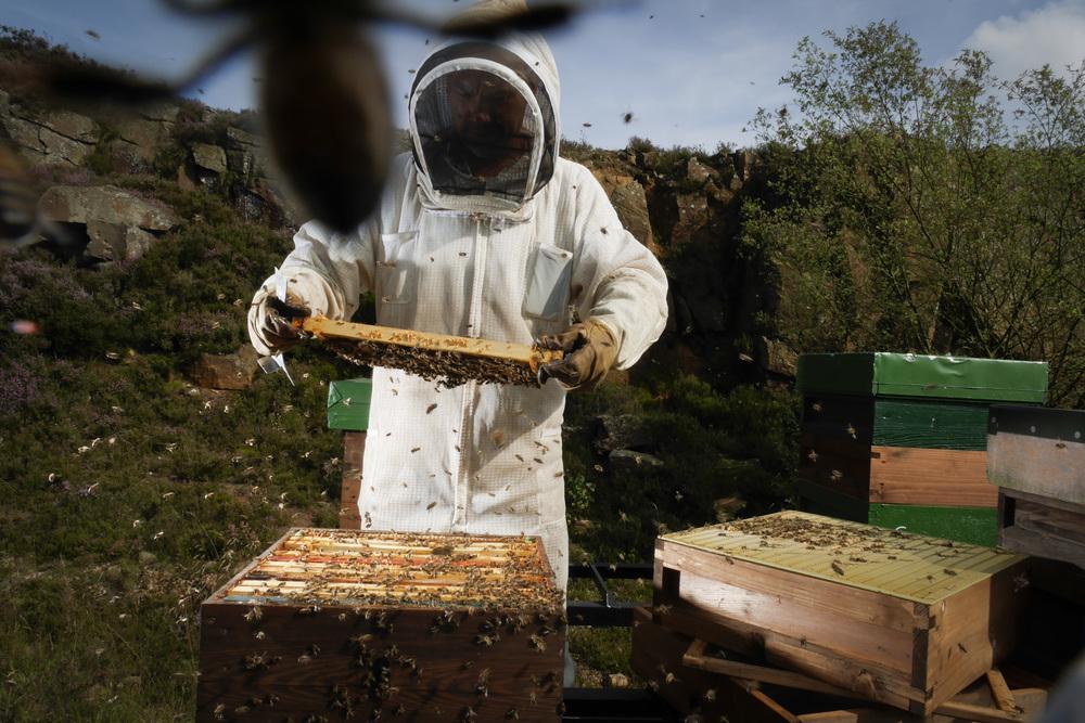 Beekeeper_Simon_Russ21.jpg