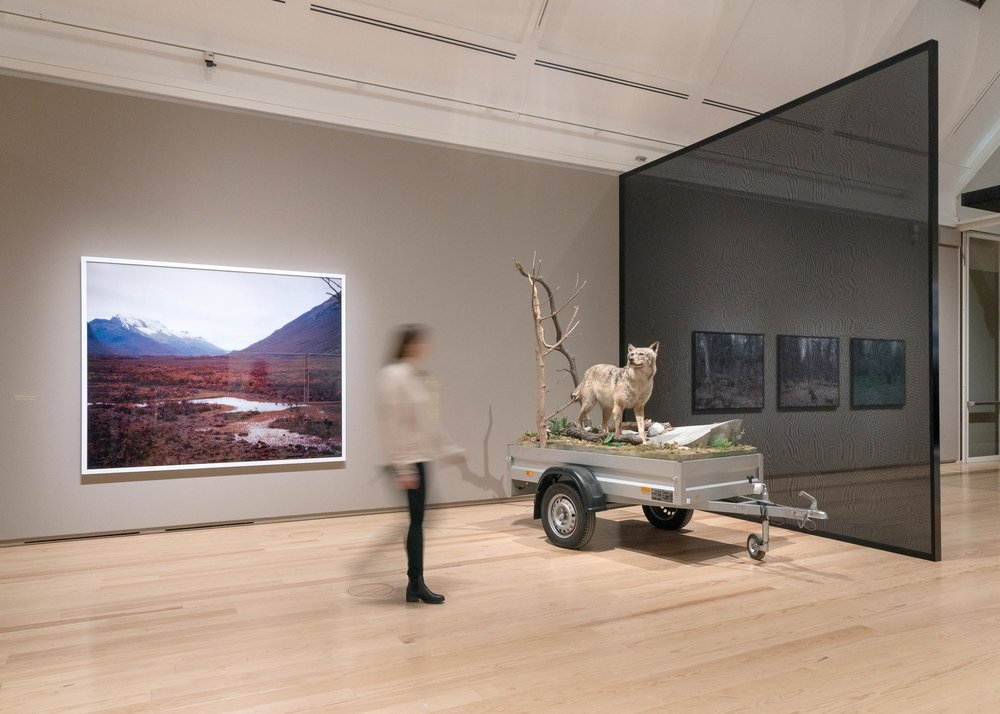 WILDNIS, Ausstellungsansicht, © Schirn Kunsthalle Frankfurt, 2018, Foto: Wolfgang Günzel