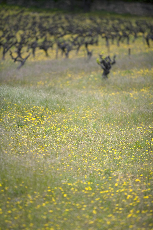 vigne-2.jpg
