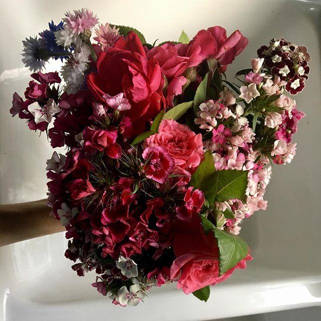 Hearts #pisgahflowers