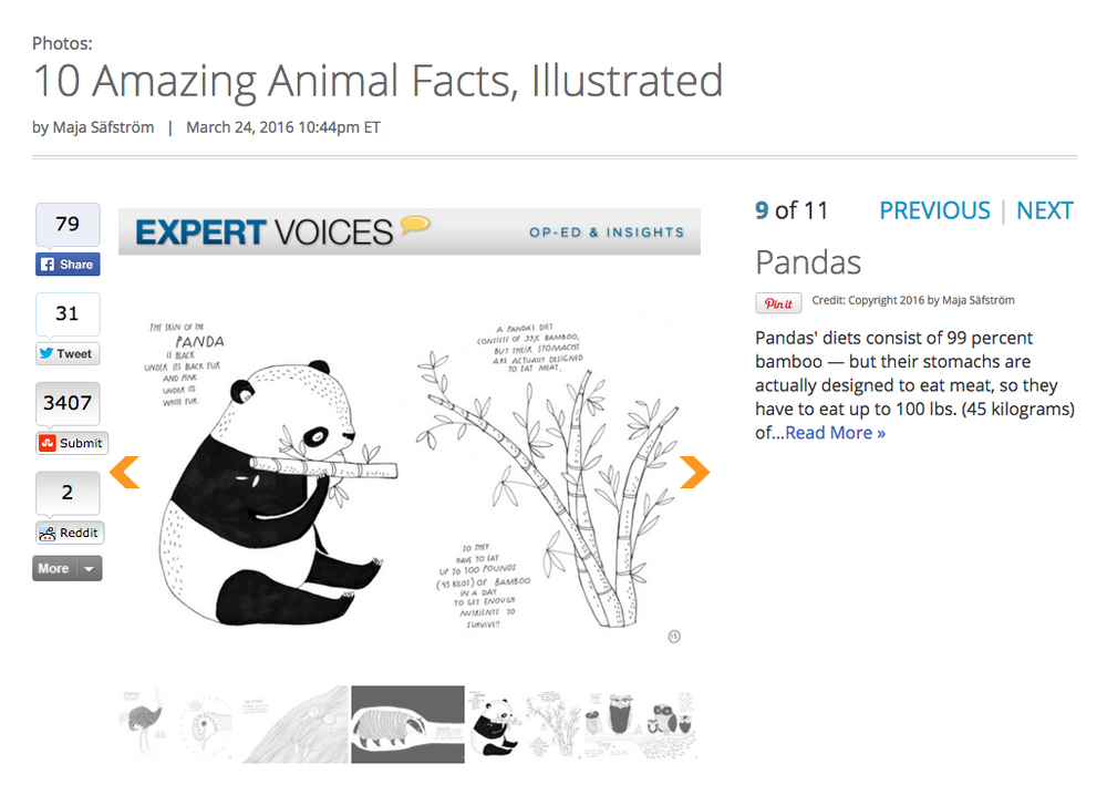 the illustrated compendium of amazing animal facts, majasbok, maja säfström, animal fact book, animal facts, panda illustration, panda facts, live science, live science news, live science news blog, live science animal