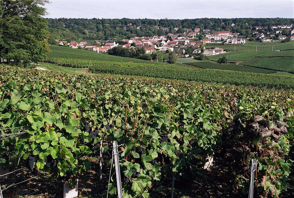 Vineyards of Autréau (Photo credit: Autréau)