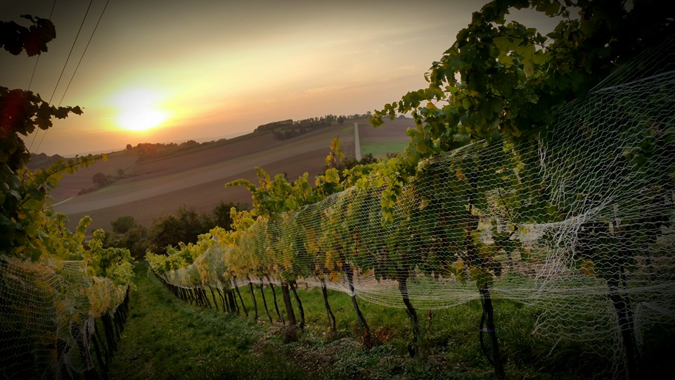Groiss vineyards sun set (Photo credits: Groiss)