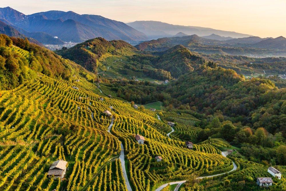 Landscape of Conegliano Valdobbiadene Prosecco  (Photo credits Arcangelo Piai, Prosecco Superiore DOCG)