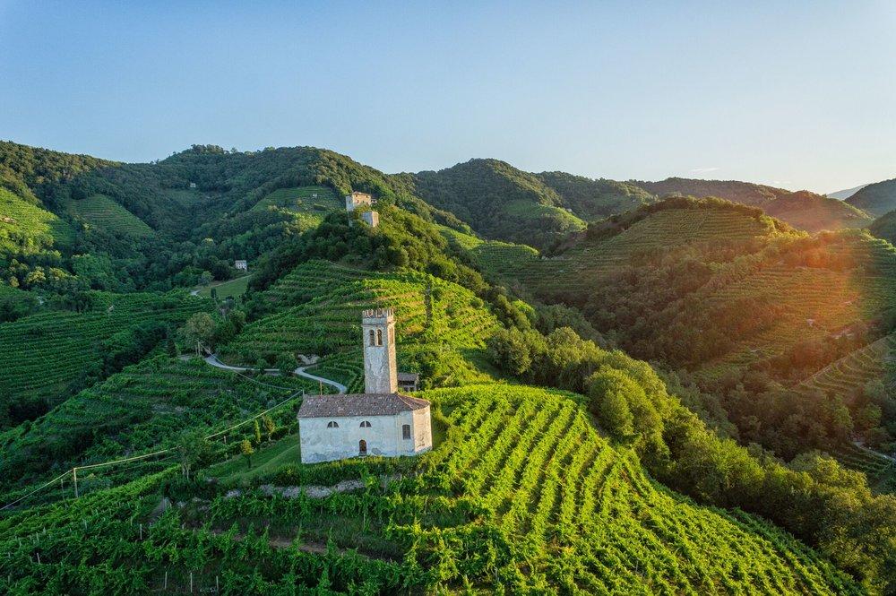 Landscape of Conegliano Valdobbiadene Prosecco  (Image: Arcangelo Piai, Prosecco Superiore DOCG)