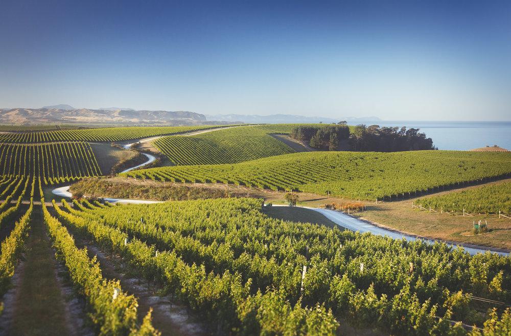 Yealands wine estate - Sea view vineyard (Image : Yealands)