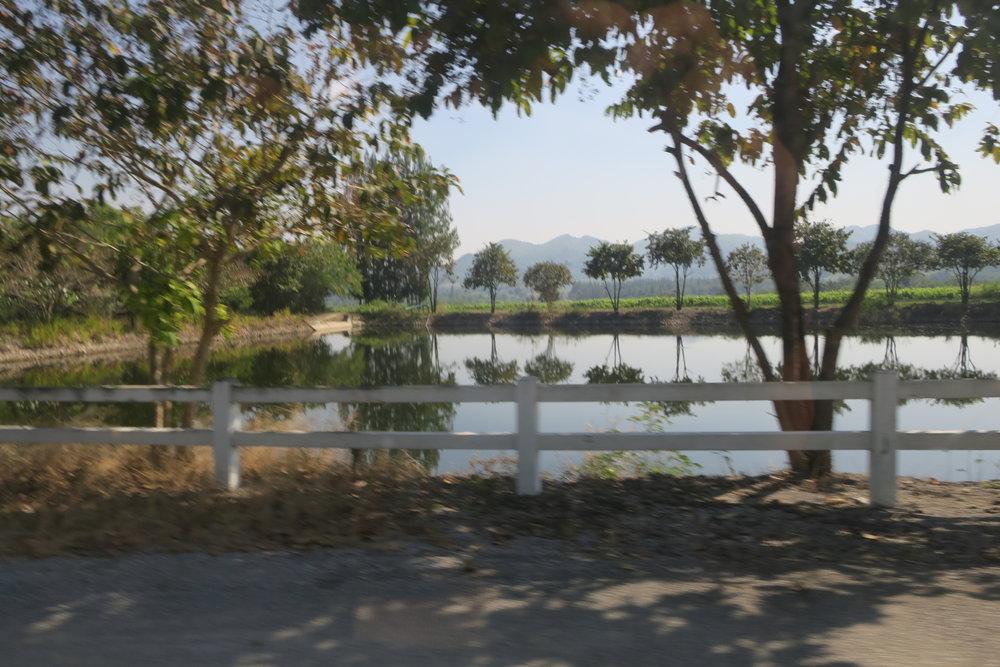 Lakes, reservoirs and natural vegetation surrounding the vineyard (Image: Sumita Sarma)