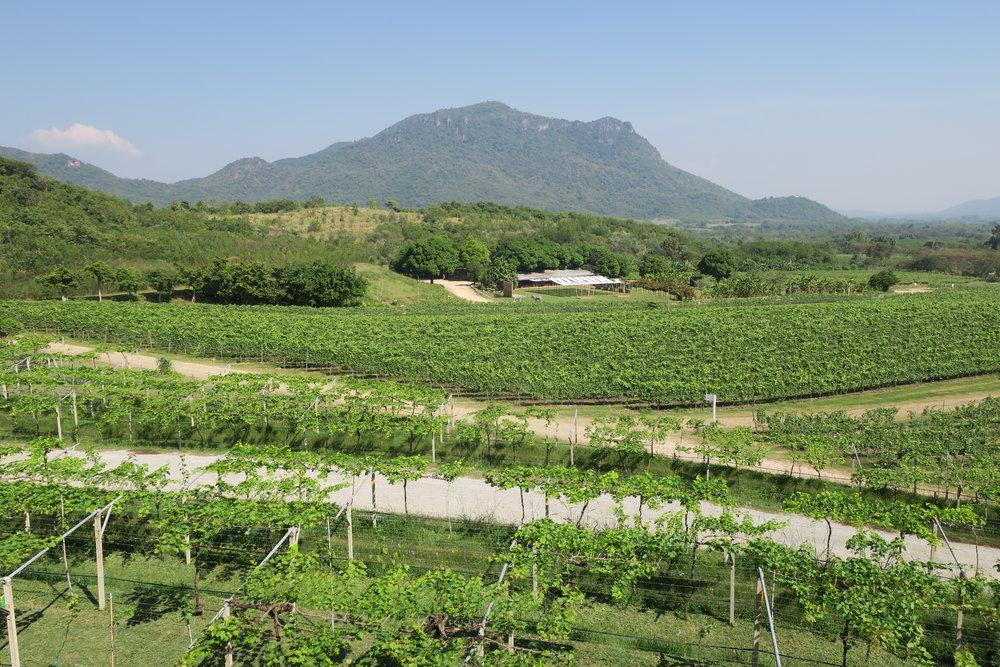 Hua Hin Hills at the backdrop of Monsoon Valley vineyards (Image: Sumita Sarma)