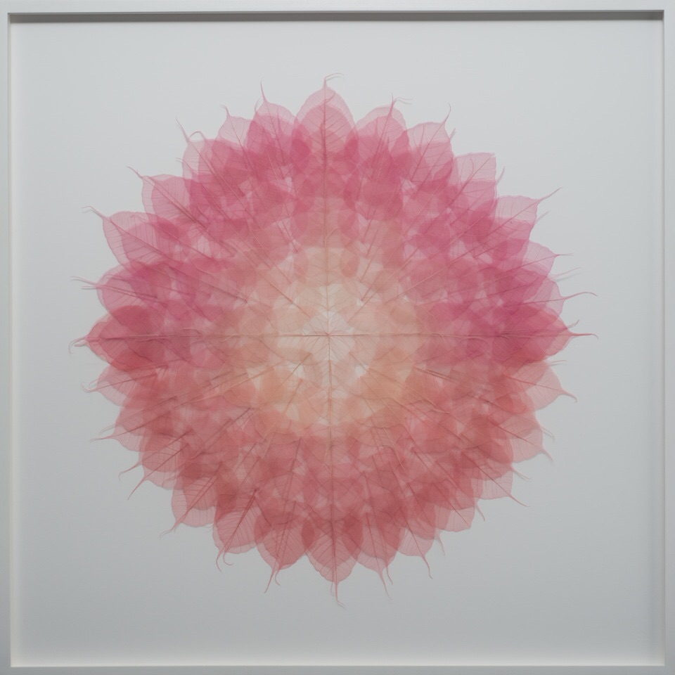 "Pijnk Red Mandala, 41"" x 41"",Bodhi (Ficus Religiosa) Skeleton Leaves, Dye, Monofilament, archival ragboard, framed. 2016"