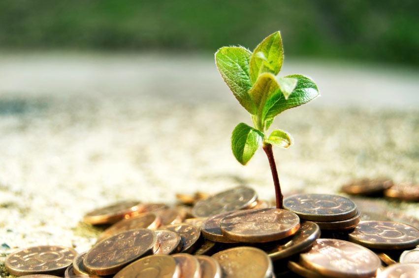 plant money.jpg