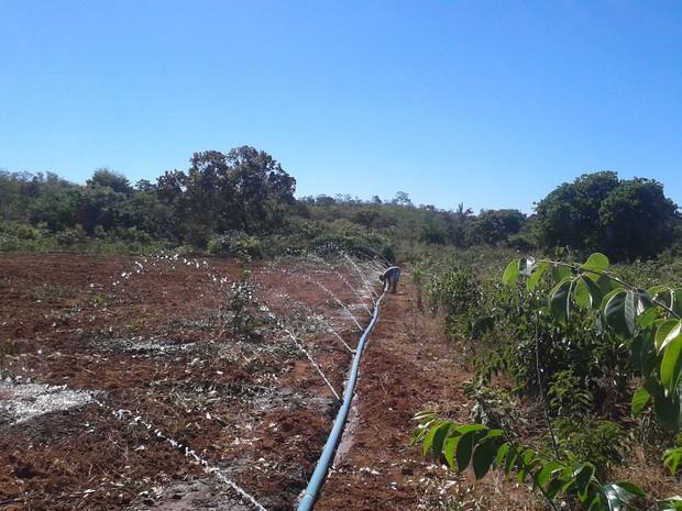Irrigação do Projeto de Captação de Água.