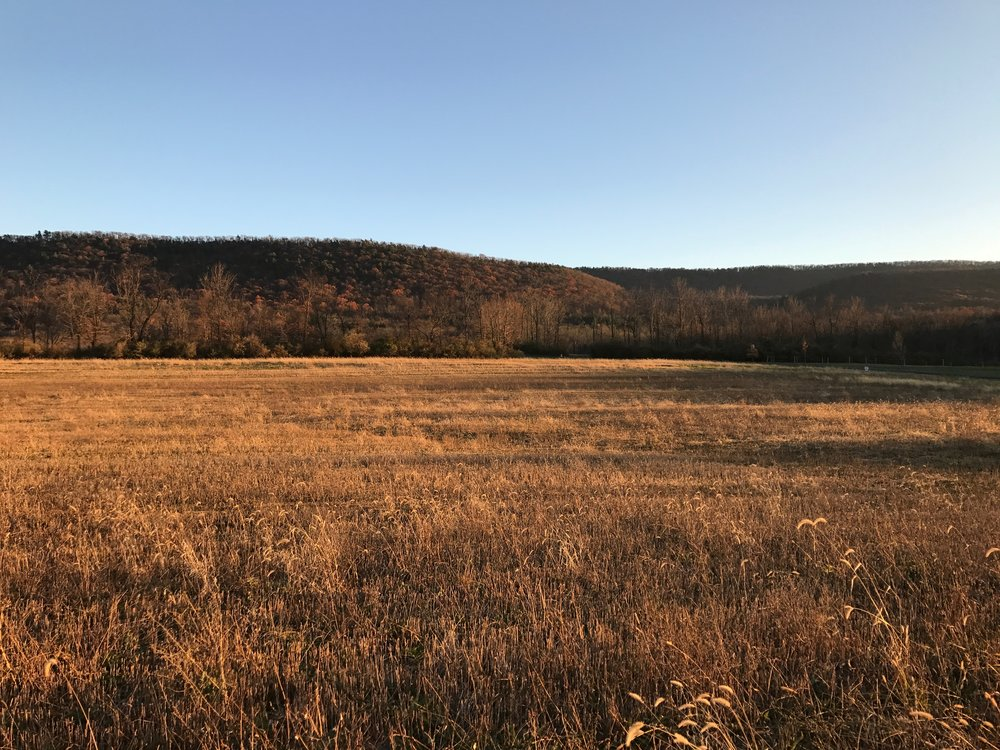 Land purchased!
