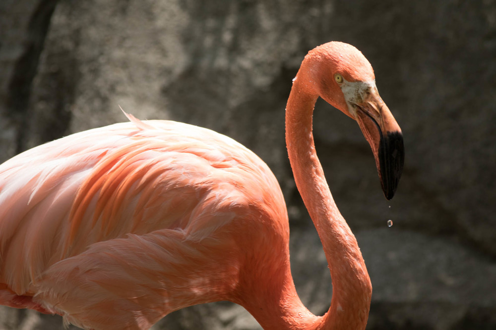 Flamingo-18.jpg
