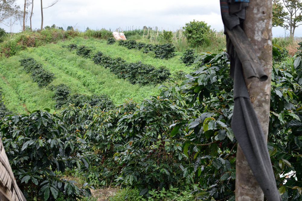Lisa and Leo's Organic in Silimakuta, Sumatra.