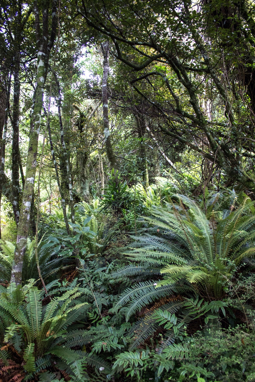 Forests reminiscent of times past. Orokonui Ecosanctuary, New Zealand.