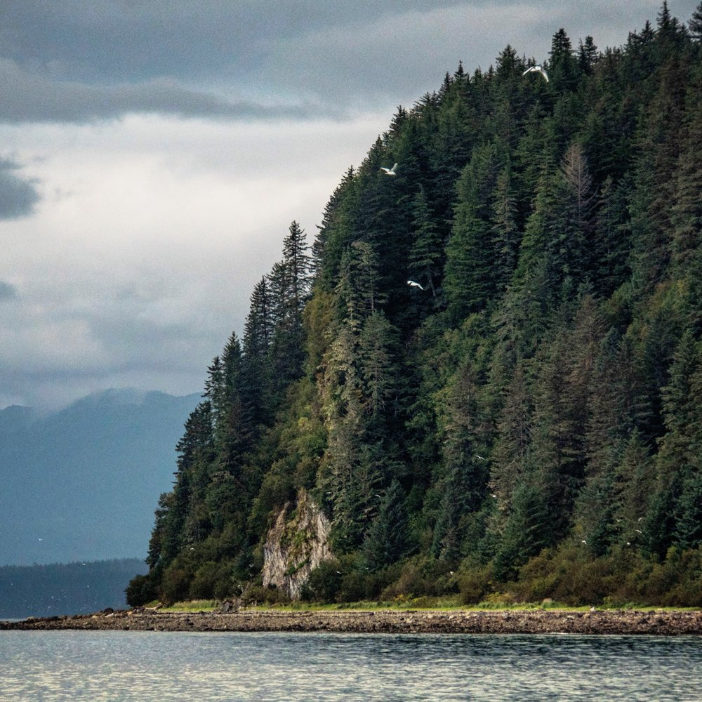 Temperate rainforests line the shores of Southeast Alaska's Inside Passage.