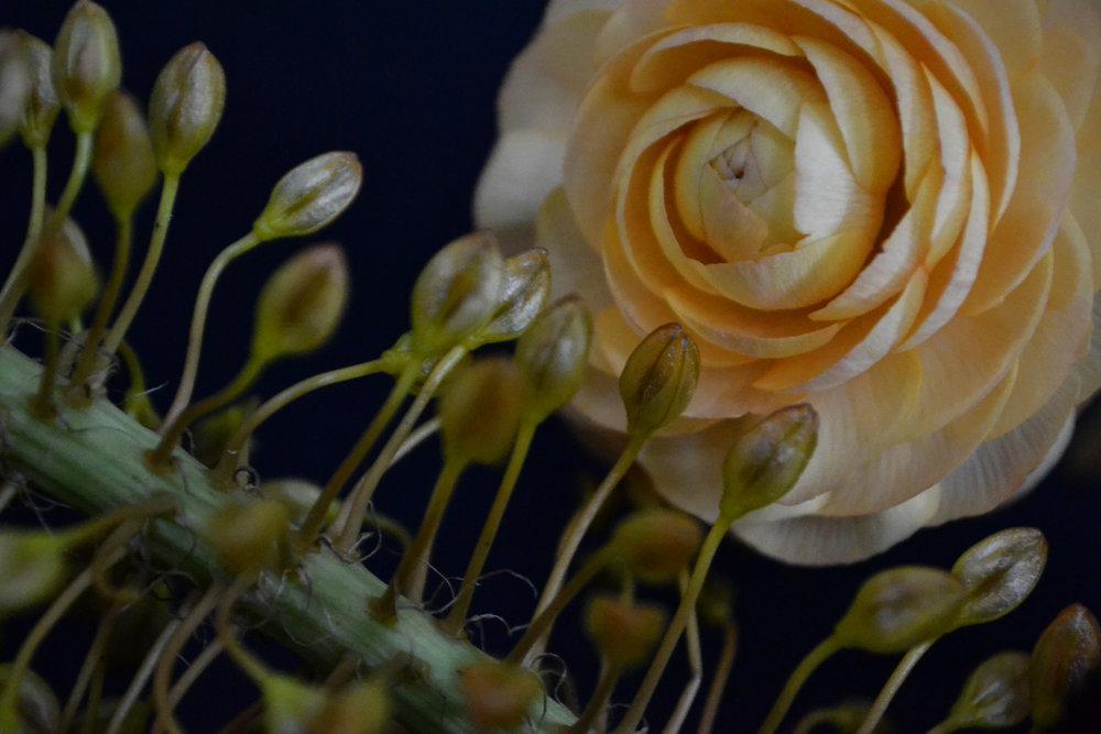 150327_LITTLE_FLOWER_SCHOOL_DUTCH_ELIZABETH_SEWARD-00138.jpg