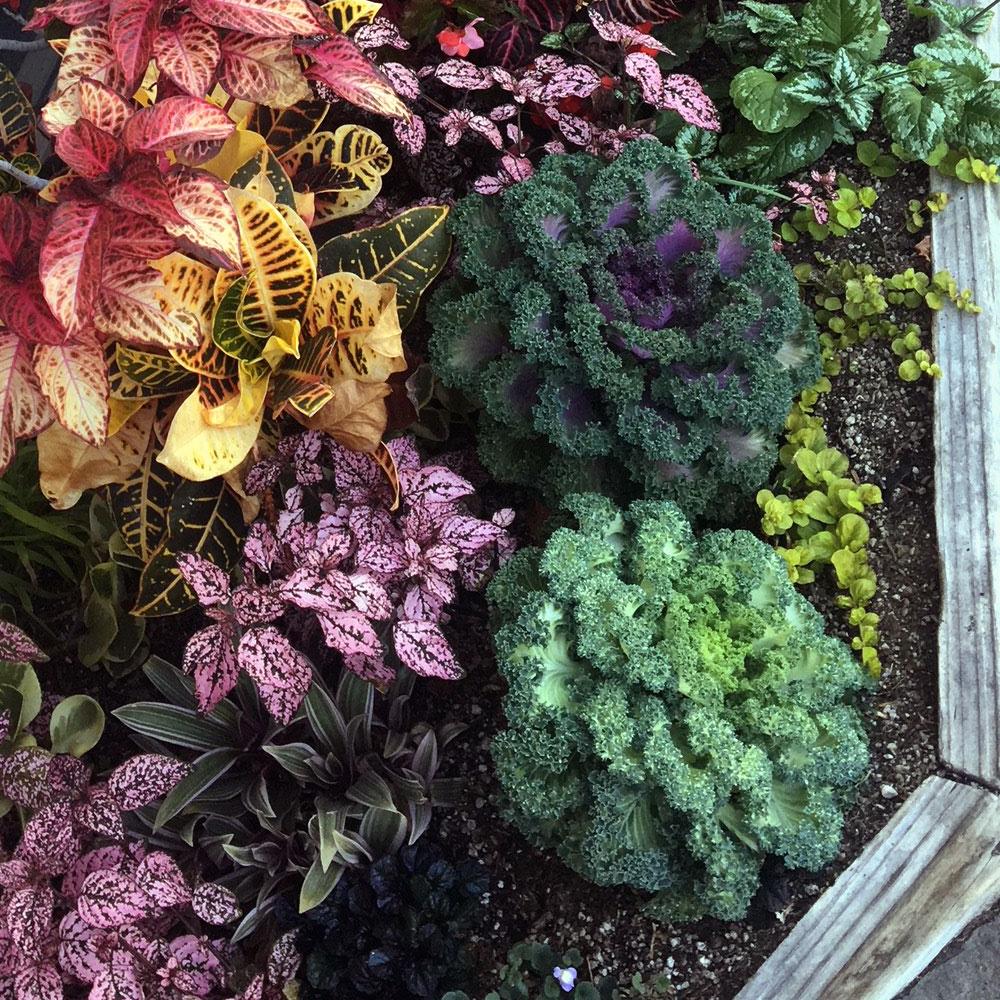 Colorful Flower Bed - Village Runner, Redondo Beach