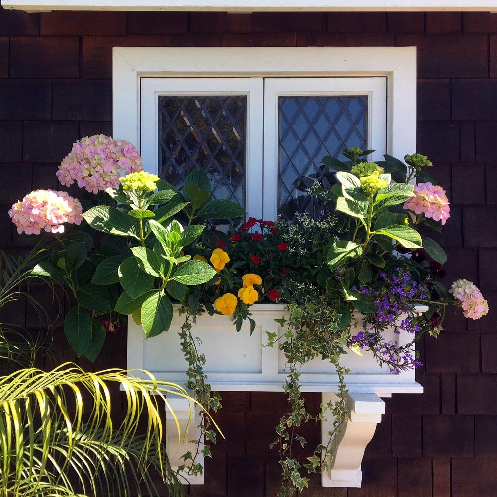 Award Winning Window Box - Upper Riviera