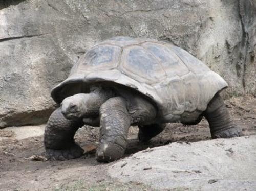 Turtle, Divorce