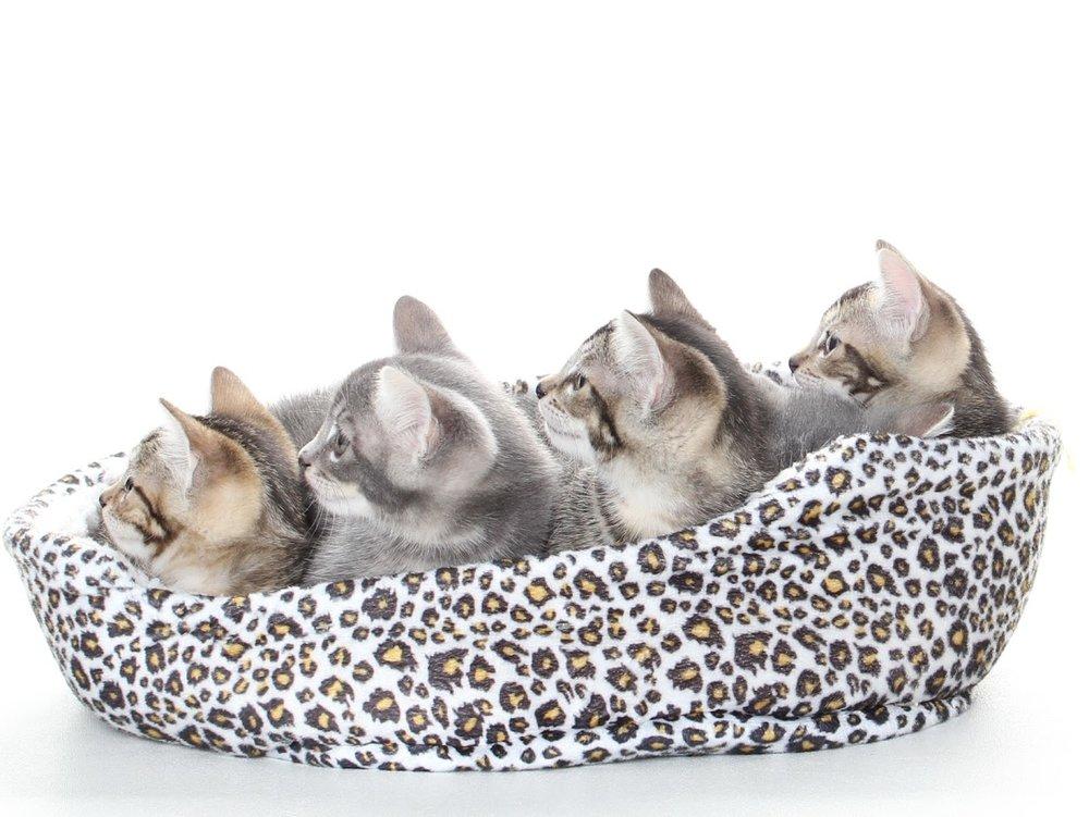 Kitties 2.JPG