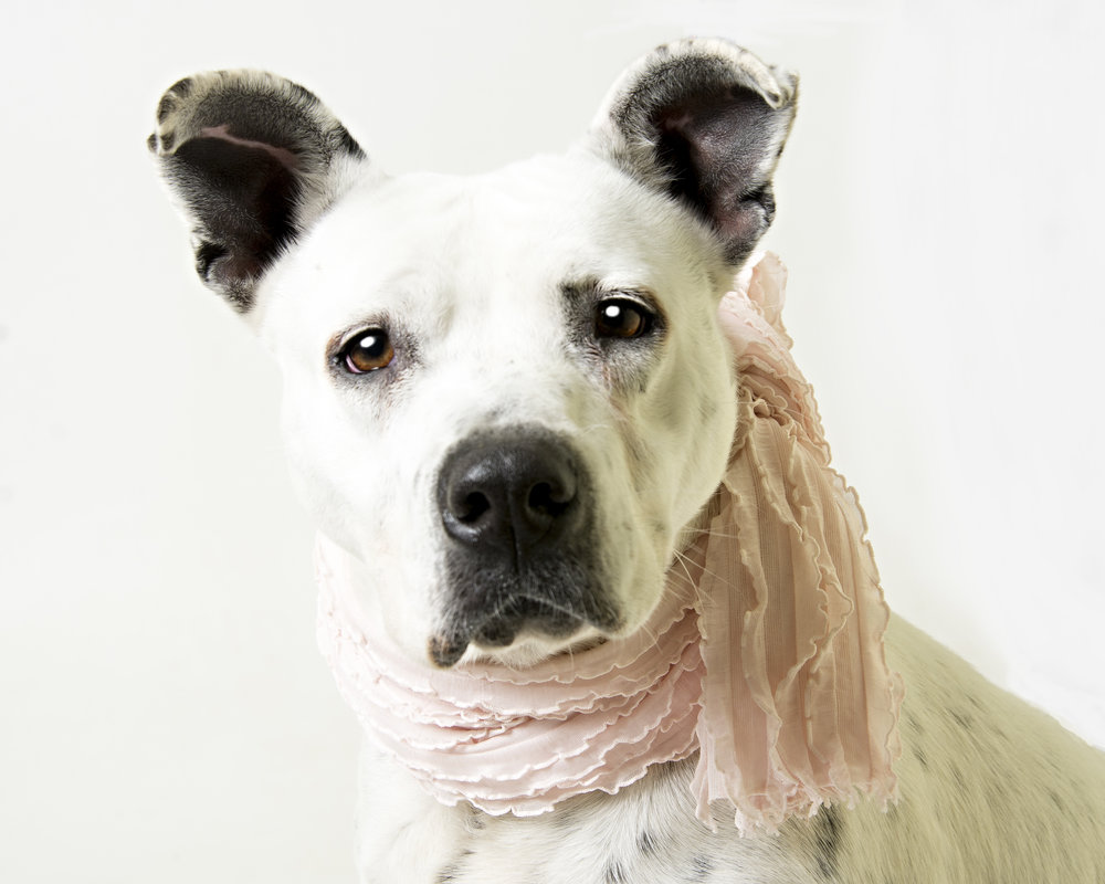 Photo of Pixie by Fluvanna SPCA