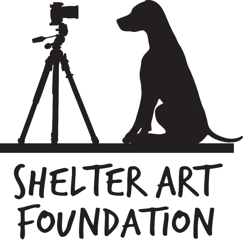 Shelter Art Foundation
