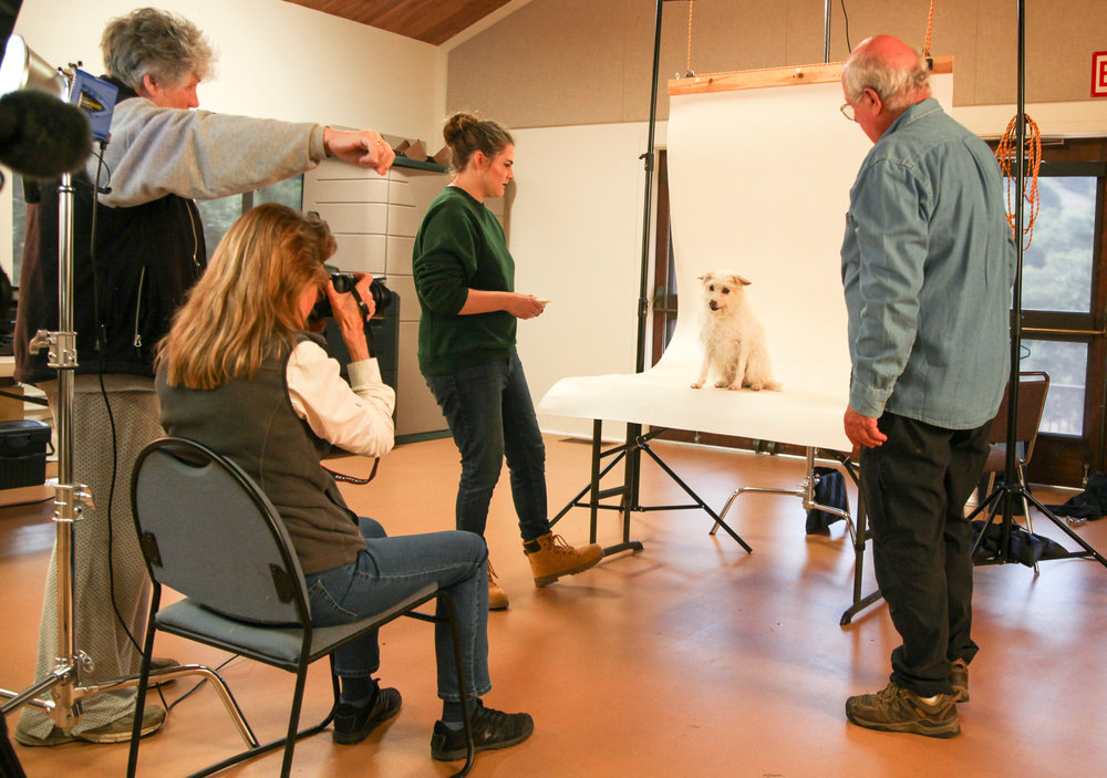 Shelter Art Foundation photo team at SPCA for Monterey County.