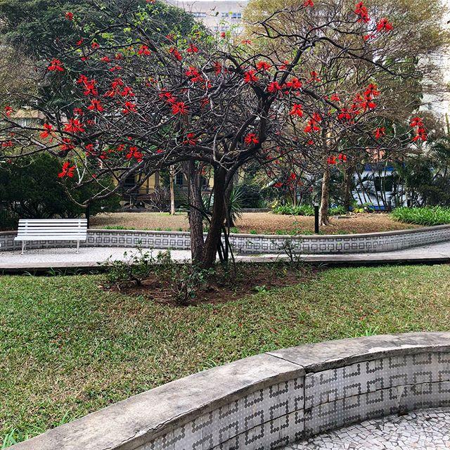Suinã. Minha árvore preferida.