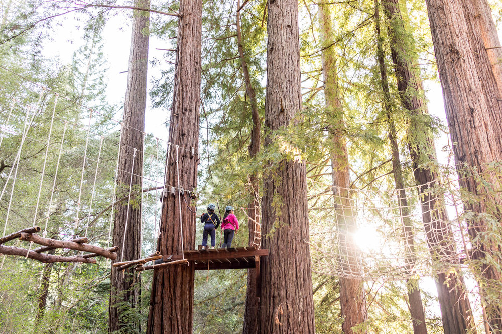 girls on a zipline platform in the redwood trees