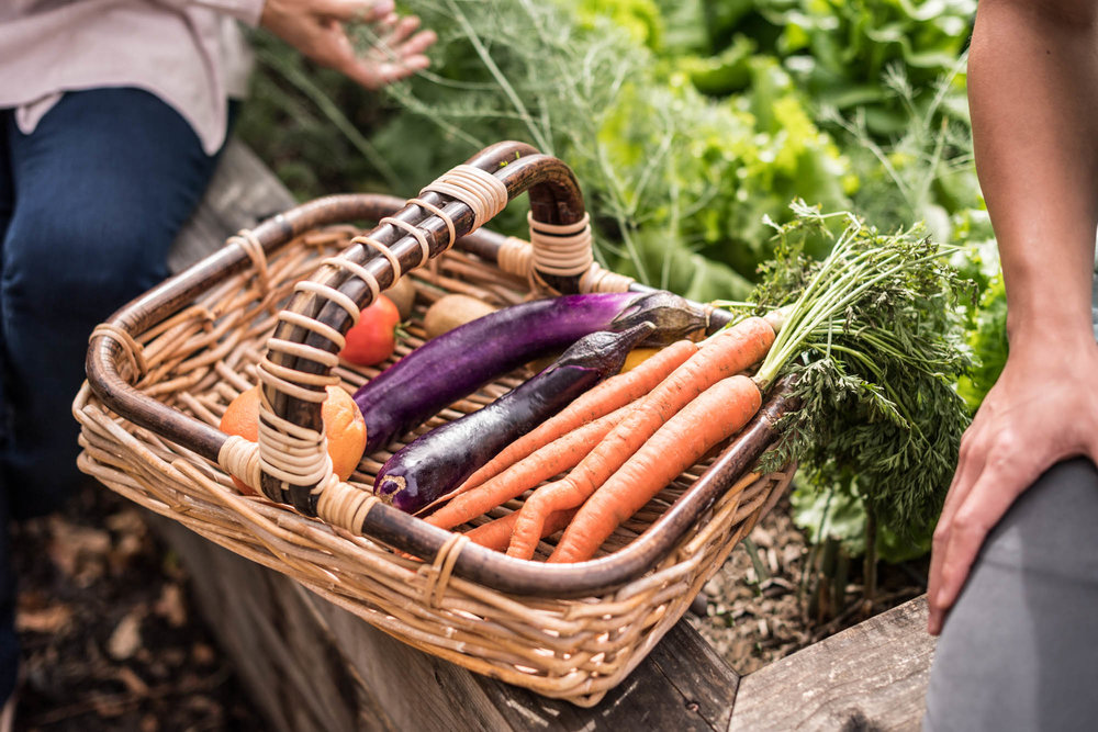 vegetables in a basket in a garden