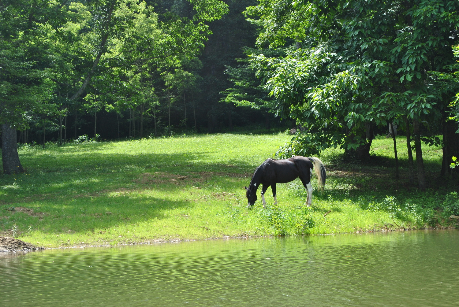 Boone Vacation Rental The Old Farmhouse At Willet Ponds Horse Farm -