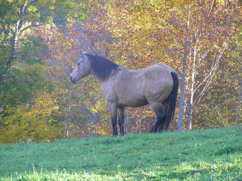 Horses_Scar.JPG