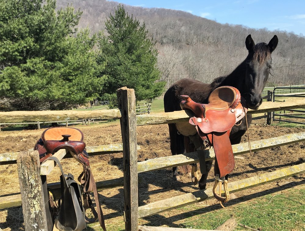Spring Saddle Cleaning