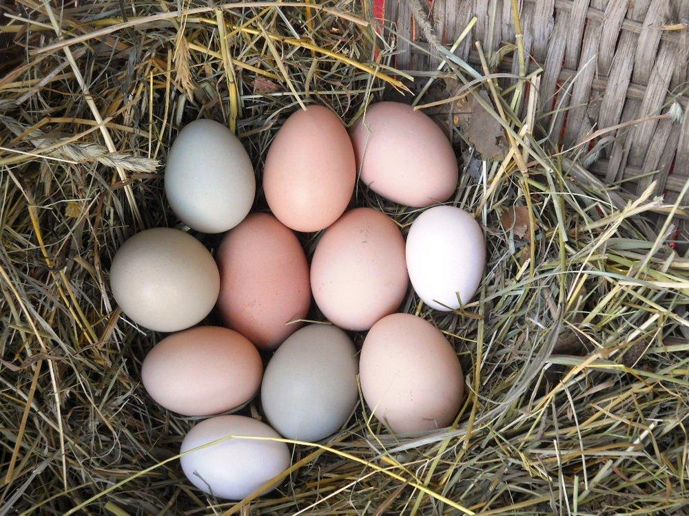 Egg Gathering2.jpg