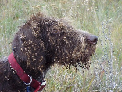 seed Dog.jpg