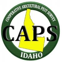 What is The Caps Program?