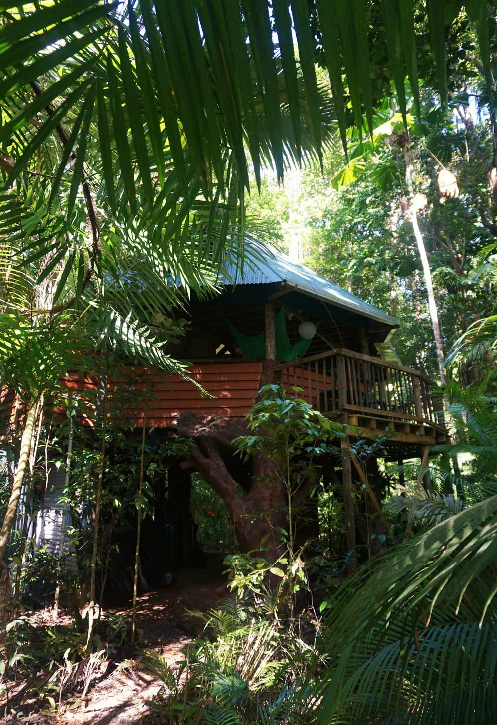 Daintree Jungle Tree House