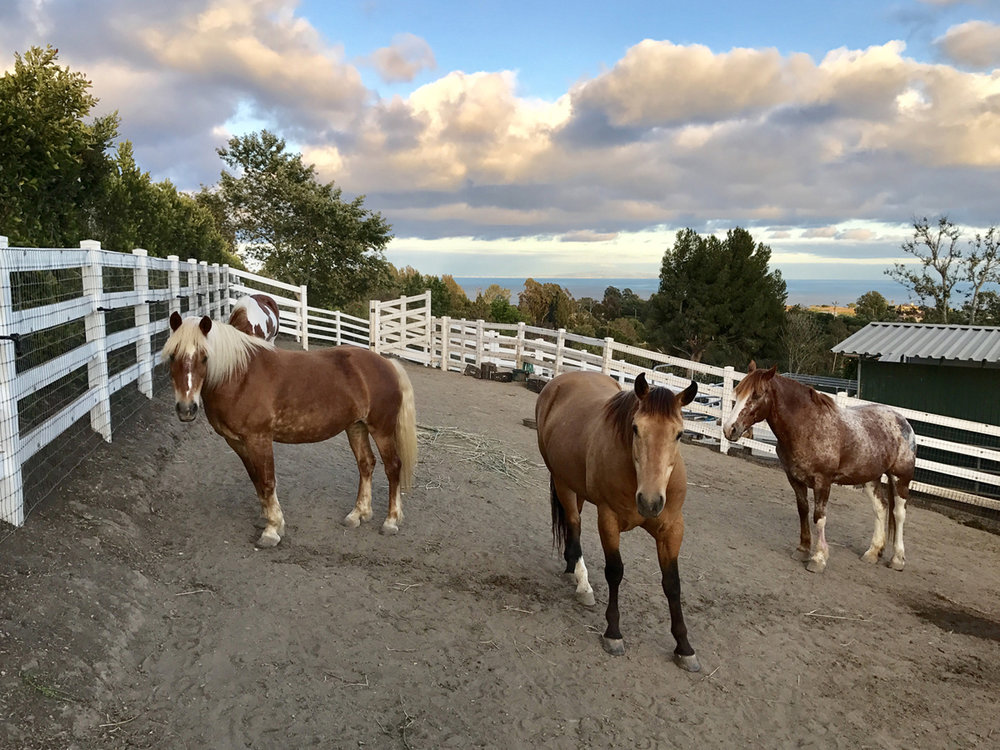 002.1 Horses- 5957 Cavalleri.jpg
