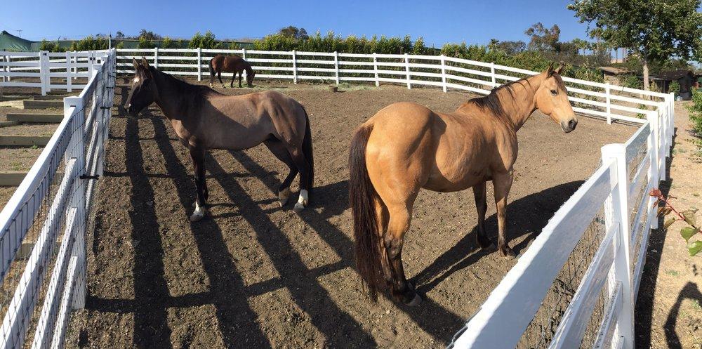 030 HorseStables- 5957 Cavalleri.jpg