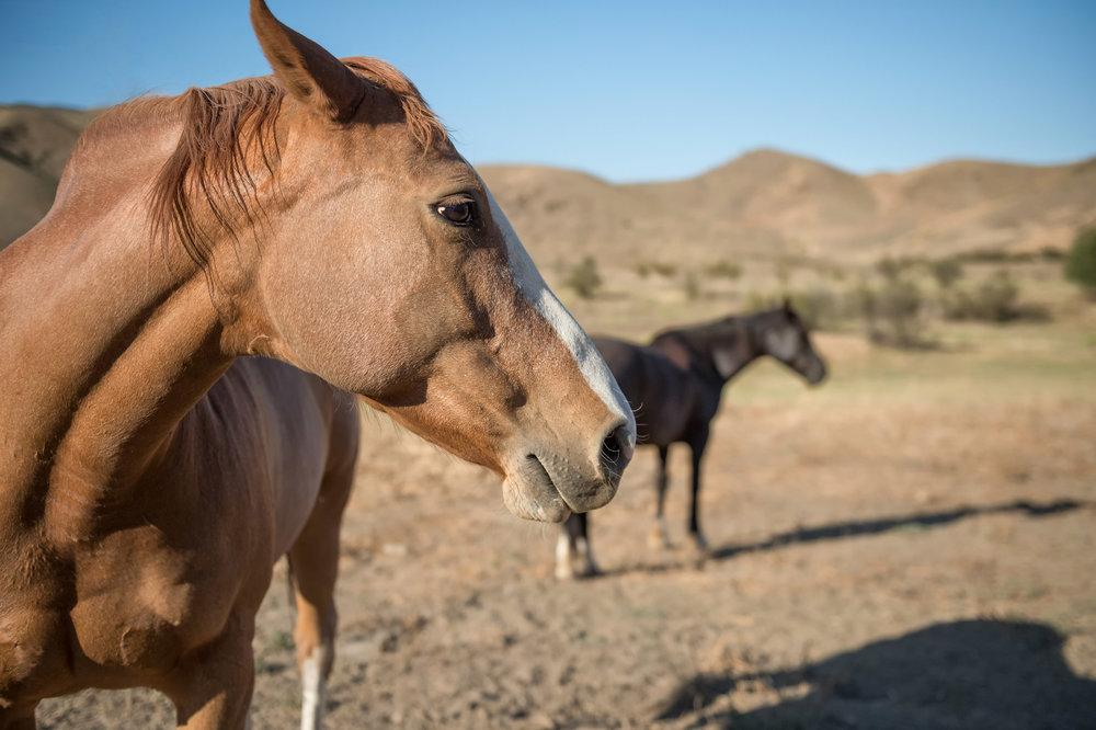 007 Horses 2317 Malibu For Sale Lease The Malibu Life Team Luxury Real Estate.jpg