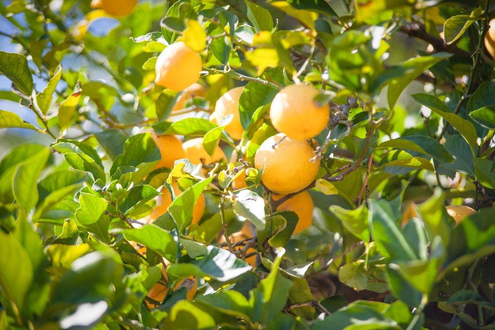 012 Orchards 2317 Malibu For Sale Lease The Malibu Life Team Luxury Real Estate.jpg